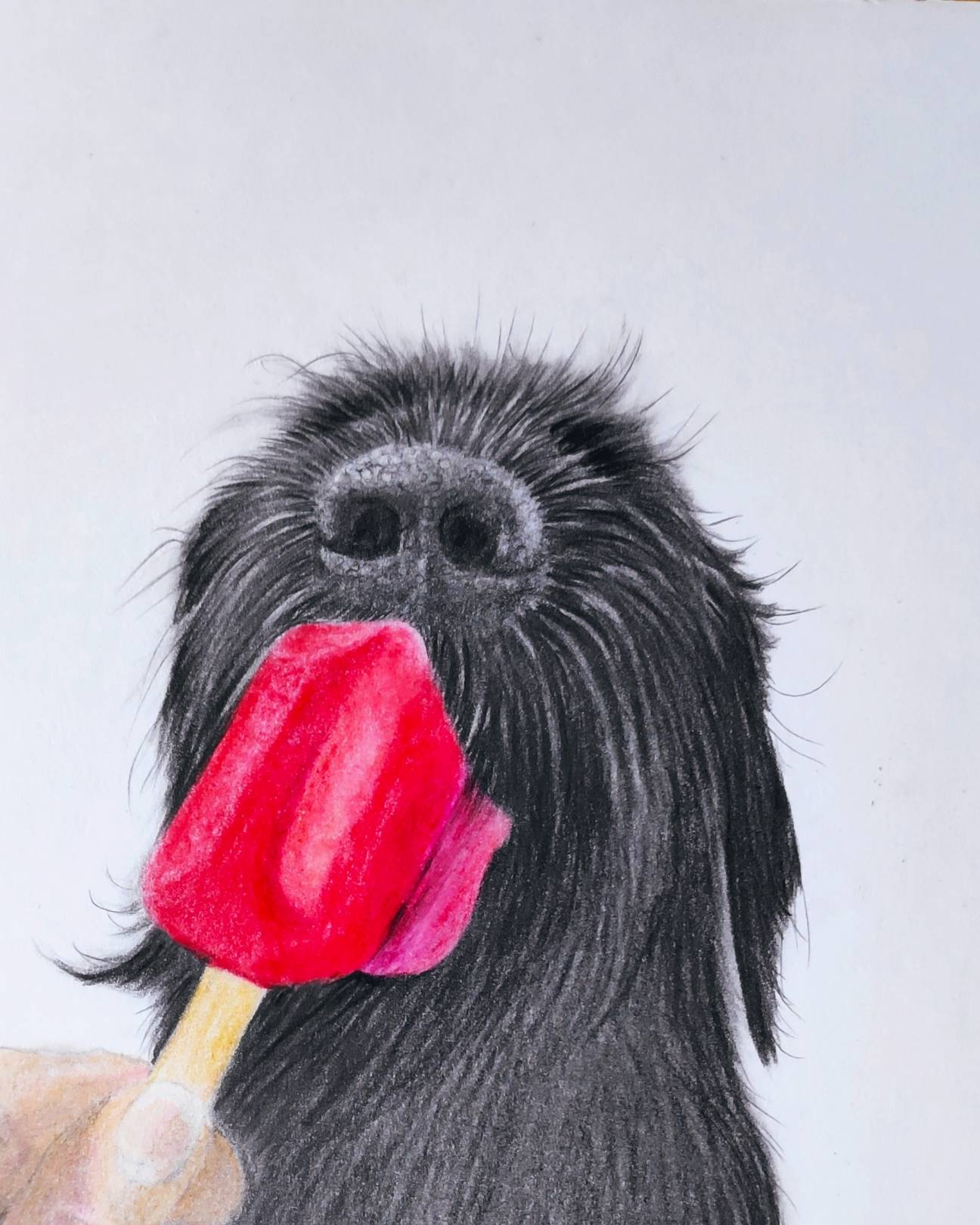 coloured pencil canine portrait, Hunde Portrait als Bunststiftzeichnung