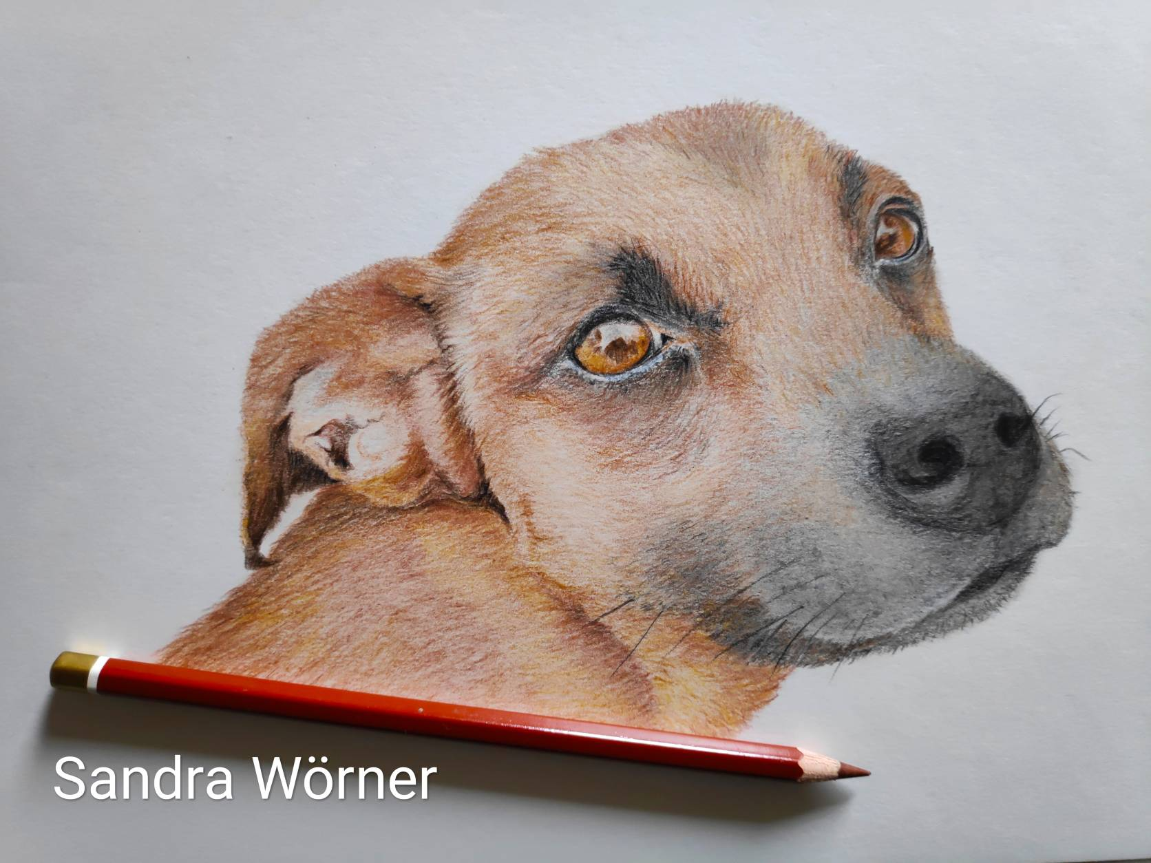 canine portrait , dog portrait, pet portrait, Hunde Portrait